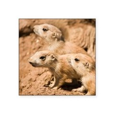 Black-tailed prairie dogs - Square Sticker 3