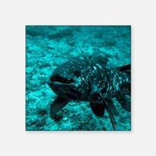 Coelacanth fish - Square Sticker 3