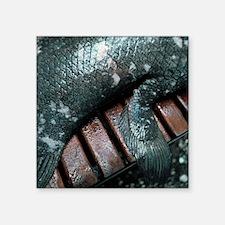 Coelacanth fish fin - Square Sticker 3