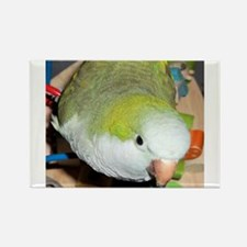 Playful Parrot Rectangle Magnet