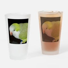 Quaker Parrot Drinking Glass