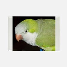 Quaker Parrot Rectangle Magnet