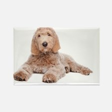 Labradoodle Puppy - Rectangle Magnet (10 pk)