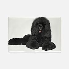 Black Poodle Lying - Rectangle Magnet
