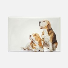 Two beagle dogs isolated on white background - Rec
