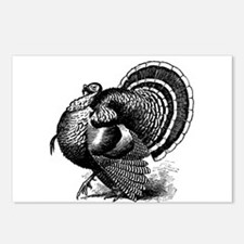 Black and White Turkey in Strut Postcards (Package