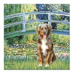 SFP-Bridge - Australian Shepherd (red merle.png Sq
