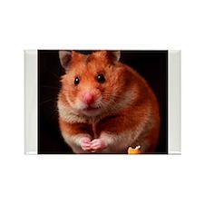 Hamster Rectangle Magnet