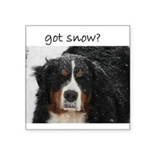 Got Snow? Rectangle Sticker