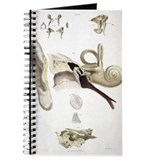 Audiology Journals & Spiral Notebooks