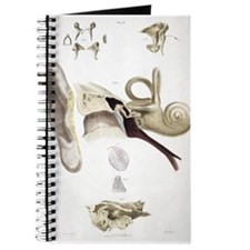Cute Anatomical drawing Journal