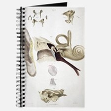 Funny Anatomy Journal