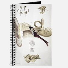 cool anatomy journal anatomy office