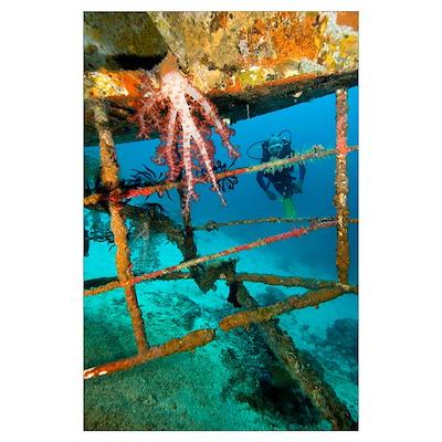 Diver exploring a shipwreck Poster