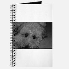 Wheaton Terrier Journal