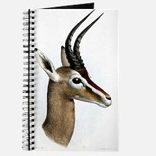 Antelope Illustration Journal