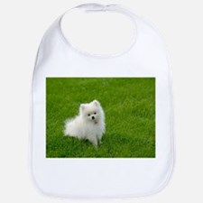 Bib - White Pomeranian Puppy On Lawn With Room For