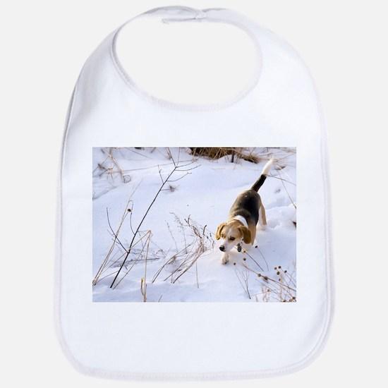 Bib - Beagle Hunting A Rabbit In The Snow