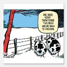 "Snowbound Cattle Square Car Magnet 3"" x 3"""