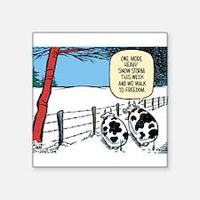 """Snowbound Cattle Square Sticker 3"""" x 3"""""""