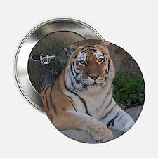 "Bengal Tiger 2.25"" Button"