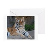 Tiger Greeting Cards (20 Pack)