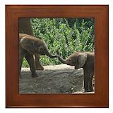 Pittsburgh zoo Framed Tiles