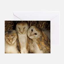 Greeting Card - Young barn owls