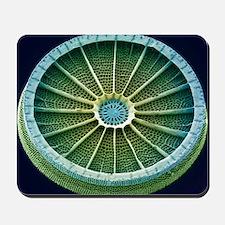 Mousepad - Diatom, SEM