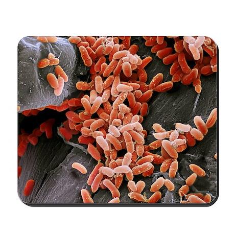 Mousepad - Pseudomonas aeruginosa bacteria, SEM