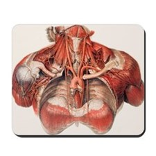 Mousepad - Blood vessels of chest and neck
