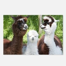 Postcards (Pk of 8) - Three different alpacas