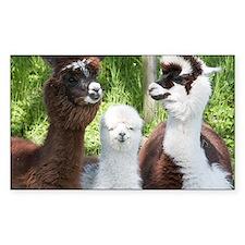 Decal - Three different alpacas