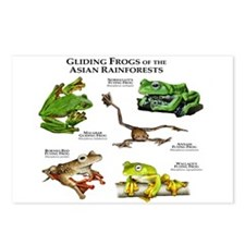 Gliding Frogs of the Asian Rainforests Postcards (