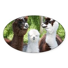 Decal - Three different alpacas