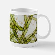 LM of Vorticella ciliates on a green alga Mugs