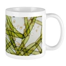 LM of Vorticella ciliates on a green alga Mugs