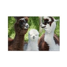 Three different alpacas - Rectangle Magnet