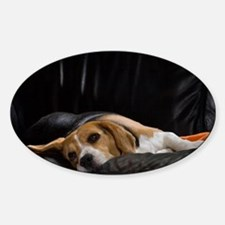 Lazy Beagle - Decal