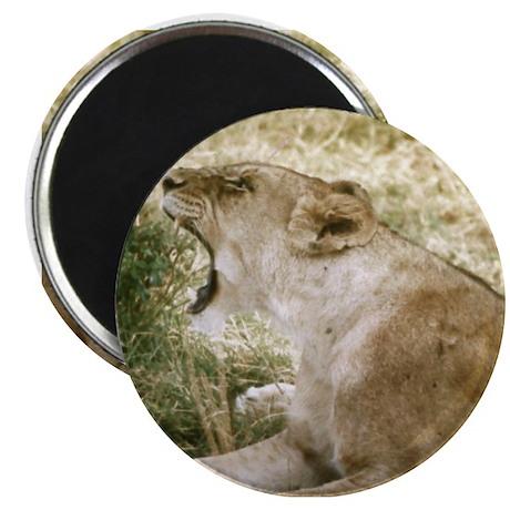 Roaring Lioness Magnet