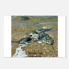 HORSESHOE CRABS Postcards (Package of 8)