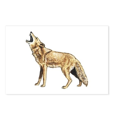 Coyote Postcards (Package of 8)