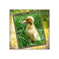 Duckling in the Grass Sticker