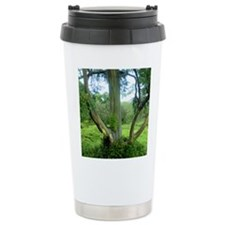 Rainbow Tree Maui Thermos Mug