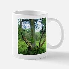 Rainbow Tree Maui Mug