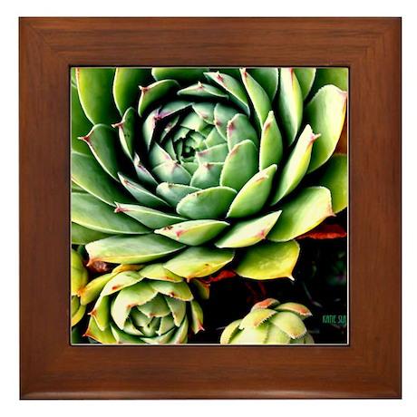 succulent in sunshine Framed Tile