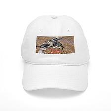 HORSESHOE CRAB Baseball Cap