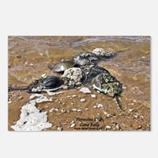 HORSESHOE CRAB Postcards (Package of 8)