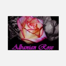 Pink Albanian Rose Rectangle Magnet