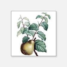 Green Pear Sticker